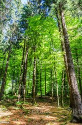 Forest Background With Green Trees And Copy Space Stock Photo Download Image Now iStock