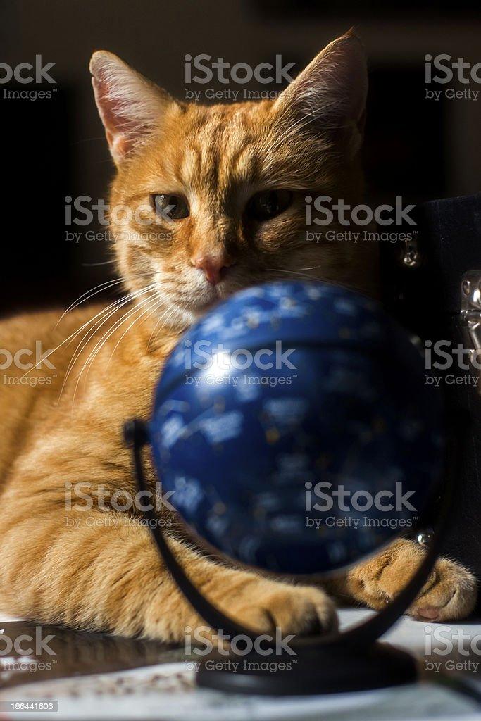 fortune teller cat stock