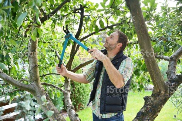 gardening man landscaping trees