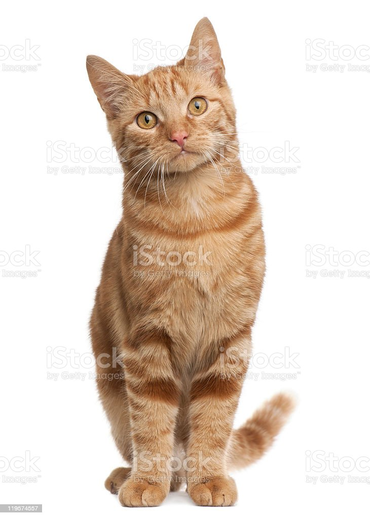 Find and follow posts tagged orange kitten on Tumblr
