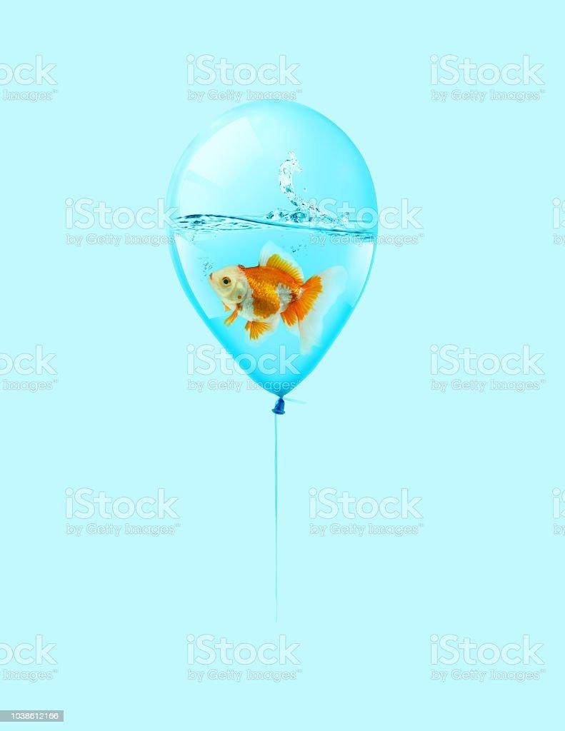 goldfish fly in balloon