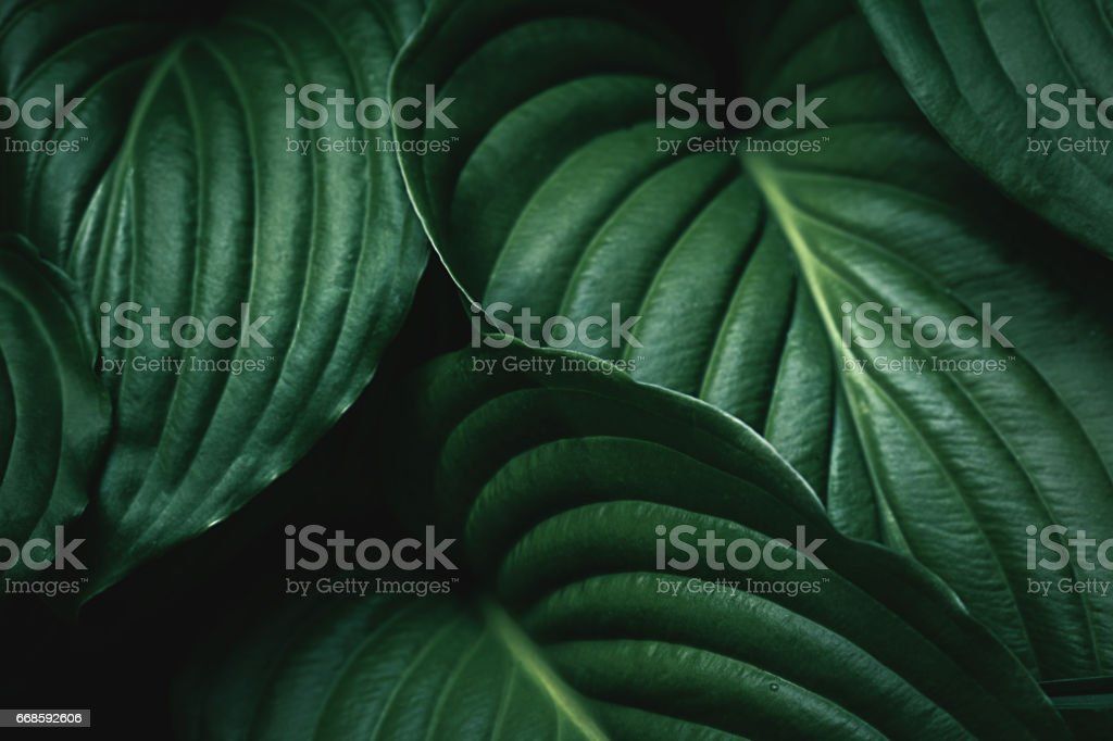Hd Wallpaper Monsoon Green Leaves Background Stock Photo Download Image Now