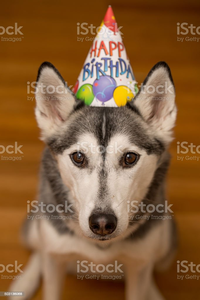 Happy Birthday Your Husky