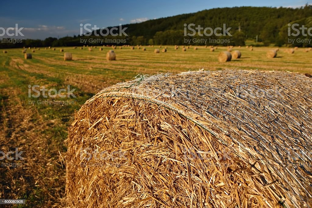 hay bail harvesting in