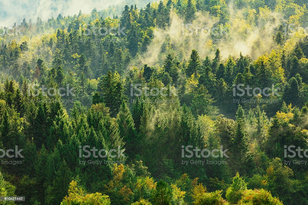 coniferous trees have leaves in all seasons but gradually lose and replace them throughout the year. Healthy Deciduous And Coniferous Trees In The Early Autumn Foton Och Fler Bilder Pa Barkborre Istock