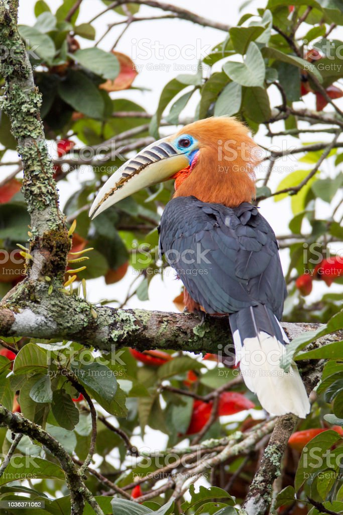 The flagship species of the east african montane forests ecoregion is the black. 2 398 Montane Forest Stock Photos Pictures Royalty Free Images Istock