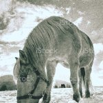 Horse In Snow In Paddock Closeup Beautiful Horse Stock Photo Download Image Now Istock