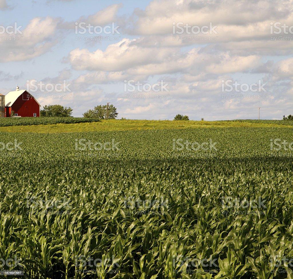 royalty free illinois landscape