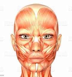 illustration of the anatomy of a female human face stock image  [ 1024 x 1024 Pixel ]