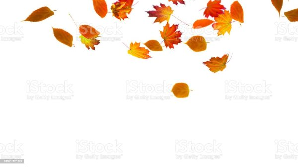 isolated colorful fall leaf stock