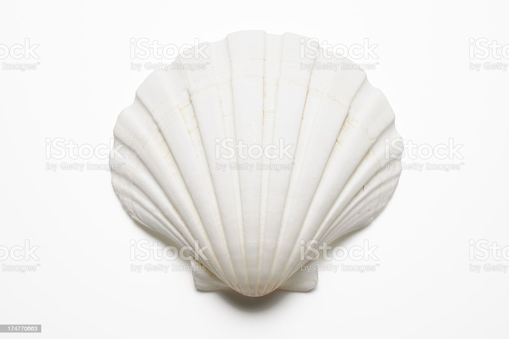 best seashell stock photos