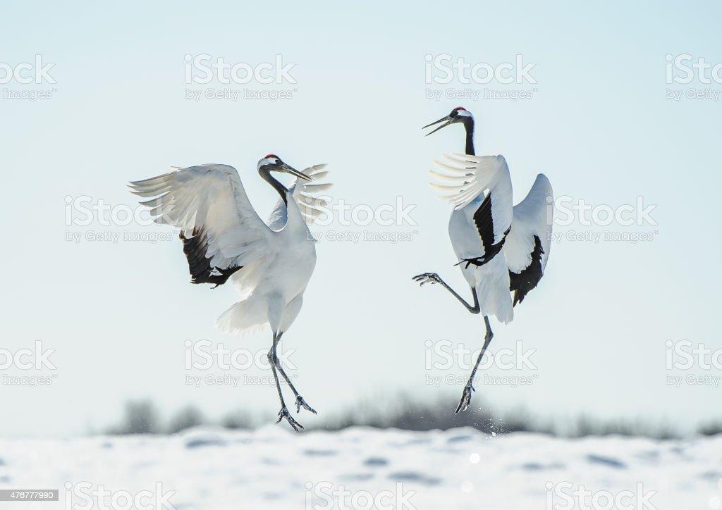 best crane bird stock