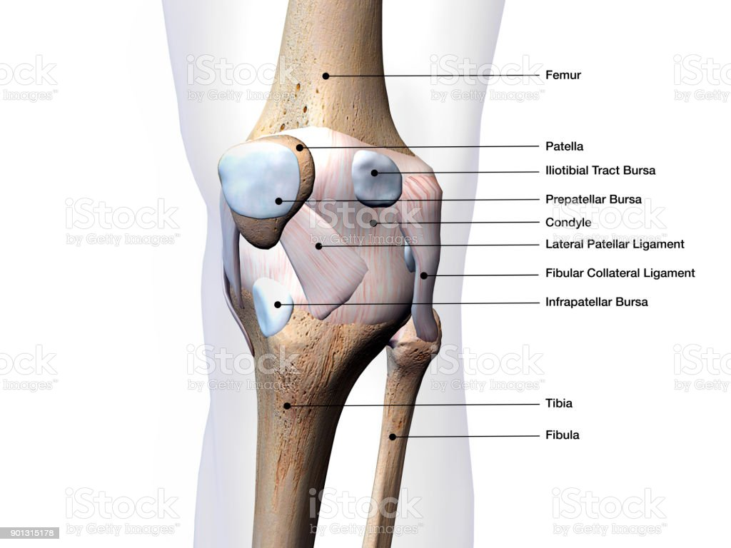 hight resolution of knee joint parts labeled on white background stock image