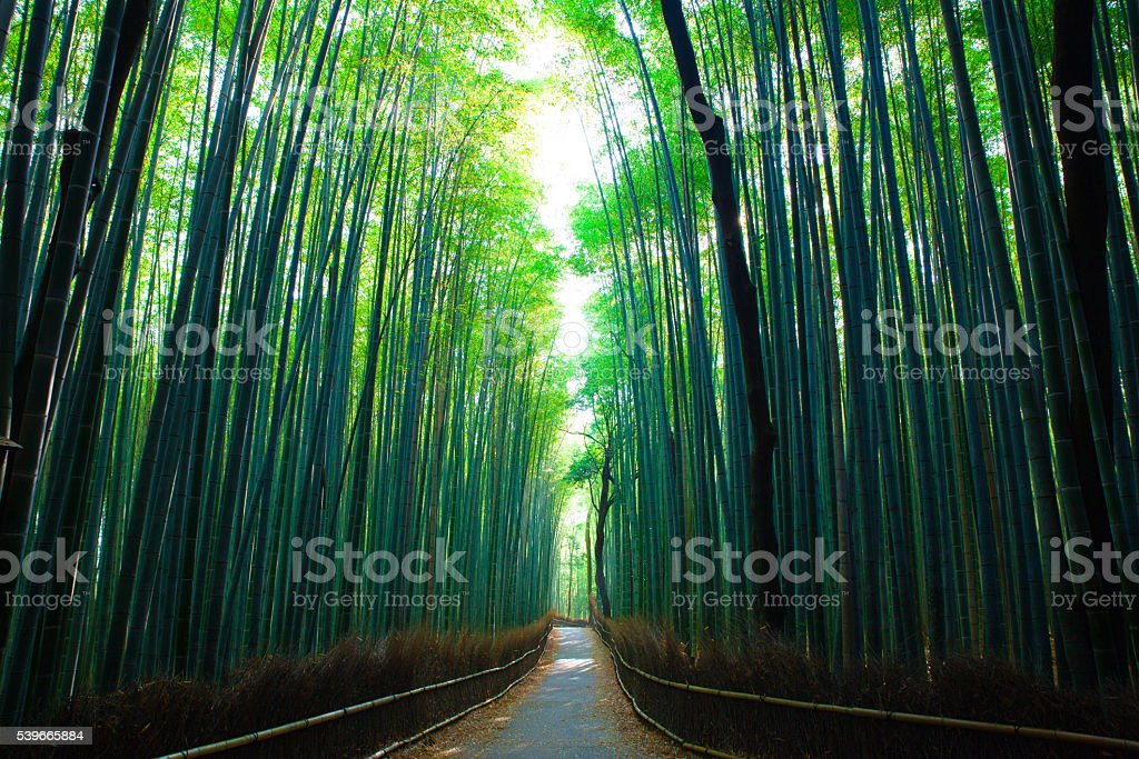 kyoto bamboo forest stock