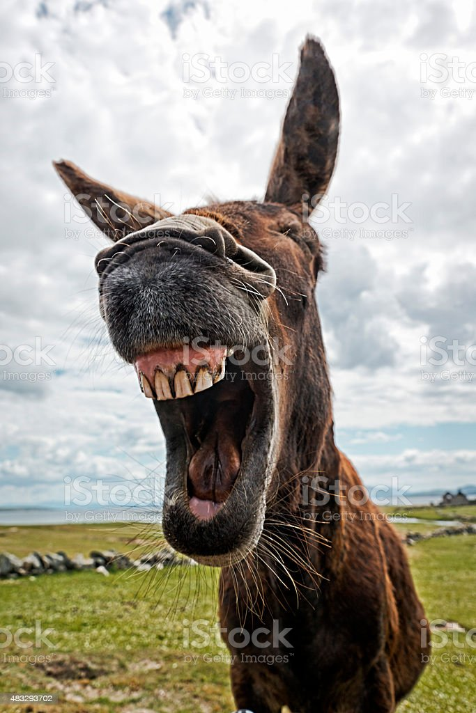 Funny Donkey Pictures : funny, donkey, pictures, 5,145, Funny, Donkey, Stock, Photos,, Pictures, Royalty-Free, Images, IStock