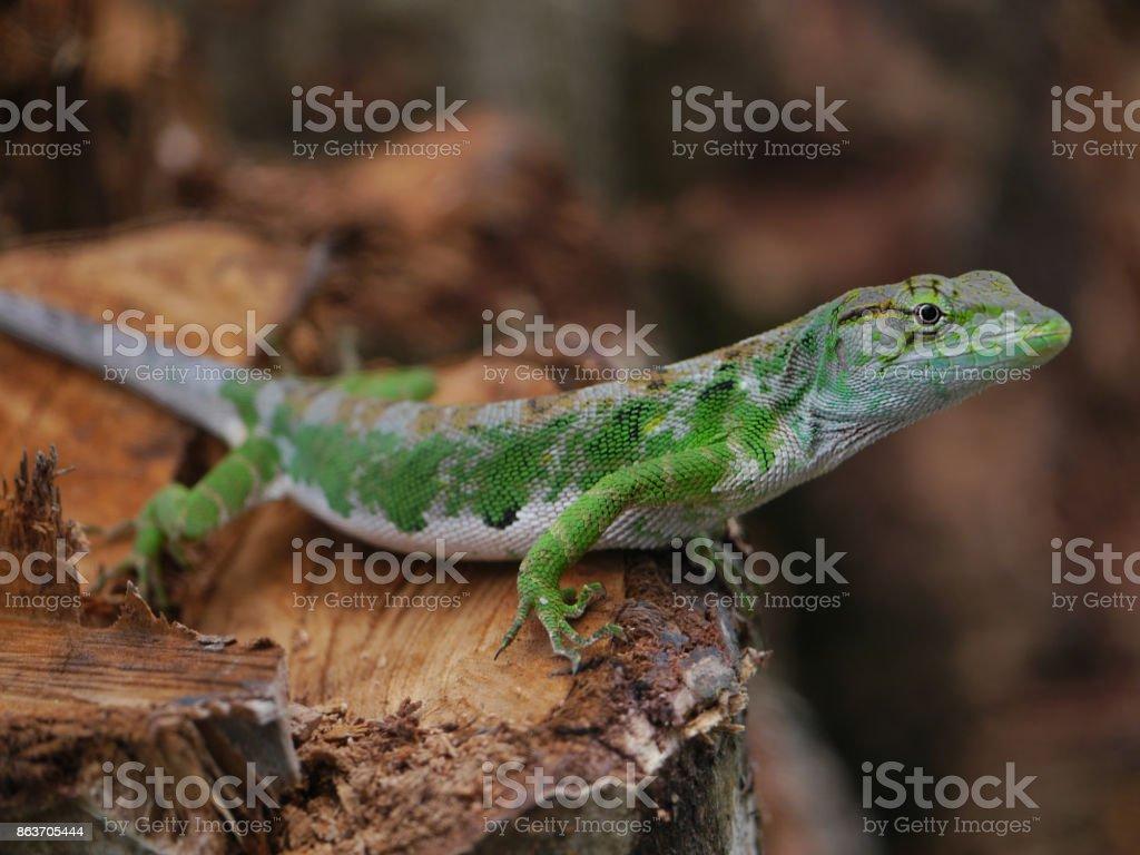 lizard standing on tree