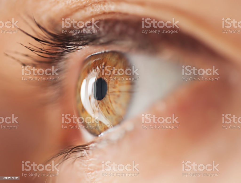 best human eye stock