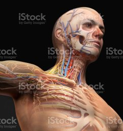 man head and chest anatomy diagram with ghost effect royalty free stock photo [ 1024 x 768 Pixel ]