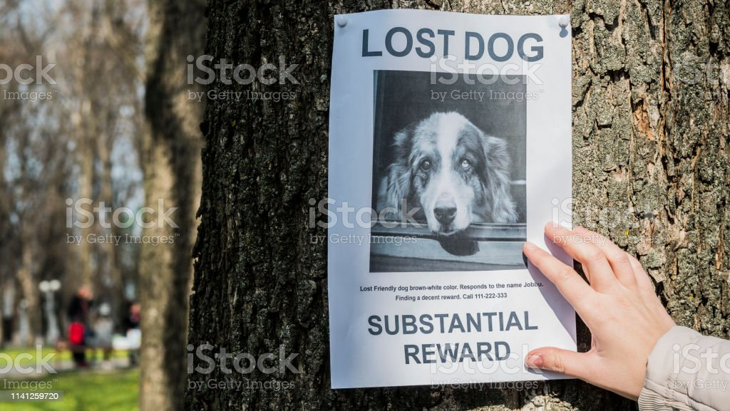 7 265 lost dog stock photos pictures royalty free images istock