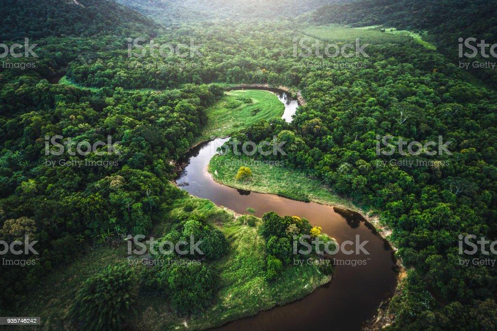The atlantic forest in brazil is among the most endangered rainforests in the world. Mata Atlantica Atlantic Skog I Brasilien Foton Och Fler Bilder Pa Amazonfloden Istock
