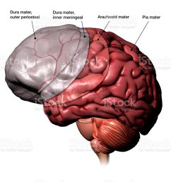 meninges membranes of the human brain labeled royalty free stock photo [ 1024 x 899 Pixel ]