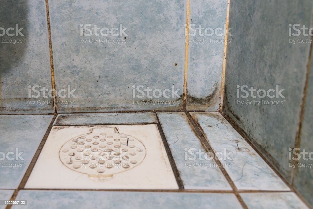 mildew dirty unhygienic mold growing on bathroom wall tile stock photo download image now istock