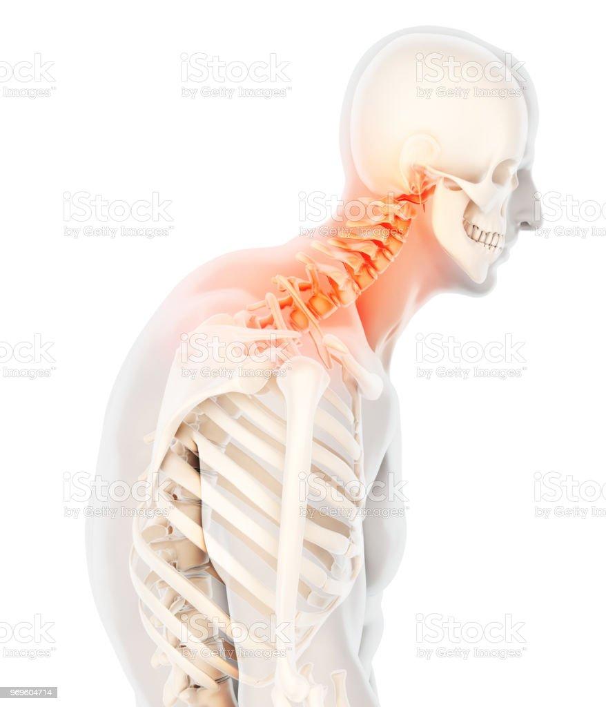 Spine Diagram Neck Spine Anatomy