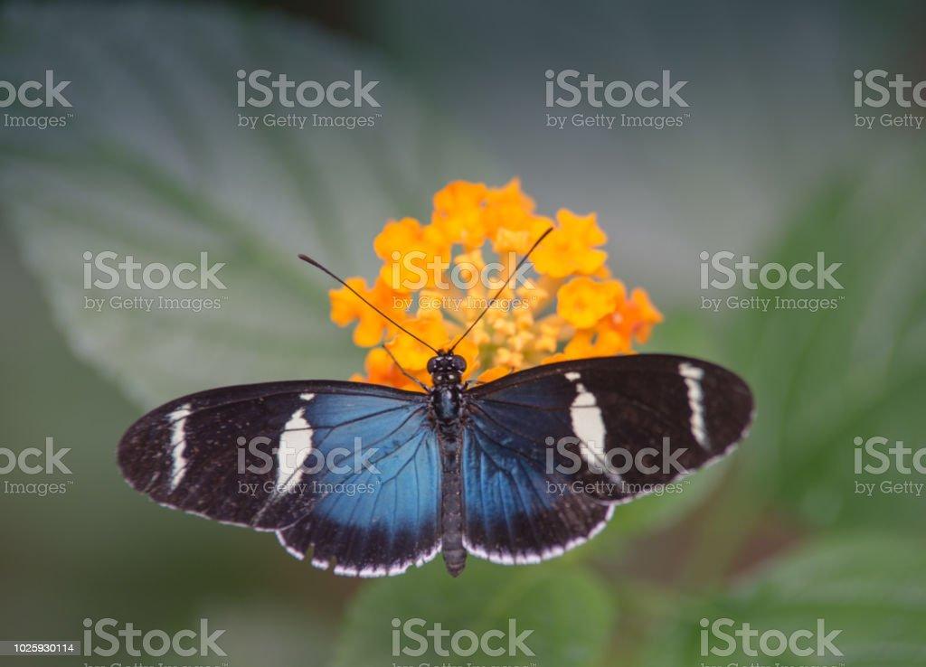 67 fleur noir et blanc stock photos pictures royalty free images istock