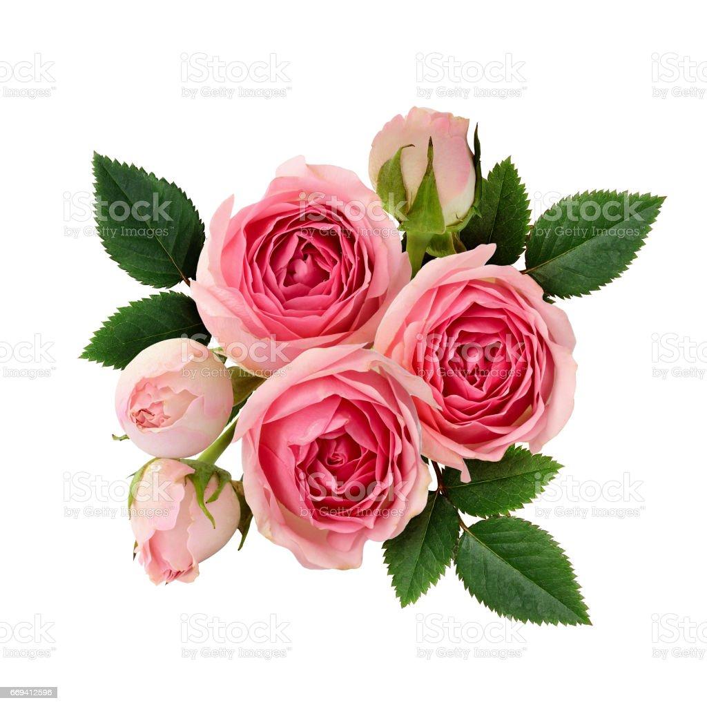 best rose flower stock