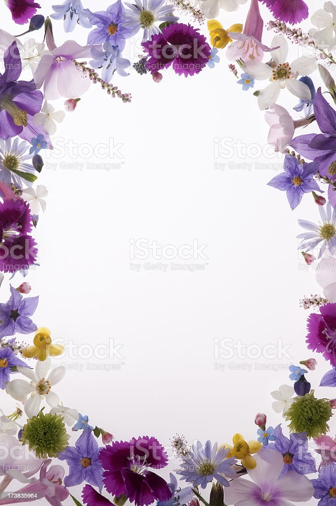 Colc 3d Wallpapers Purple White Yellow And Pink Spring Flower Border Or Frame