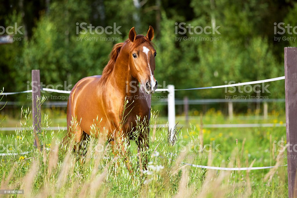 Best Horse Stock Photos Pictures  RoyaltyFree Images