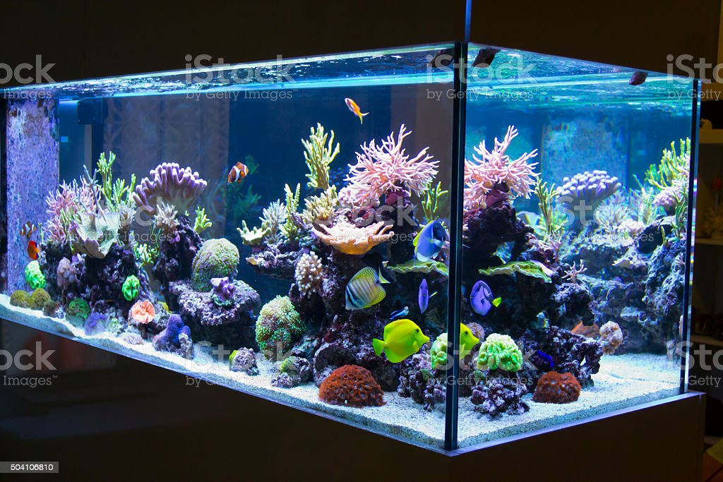 best fish tank stock