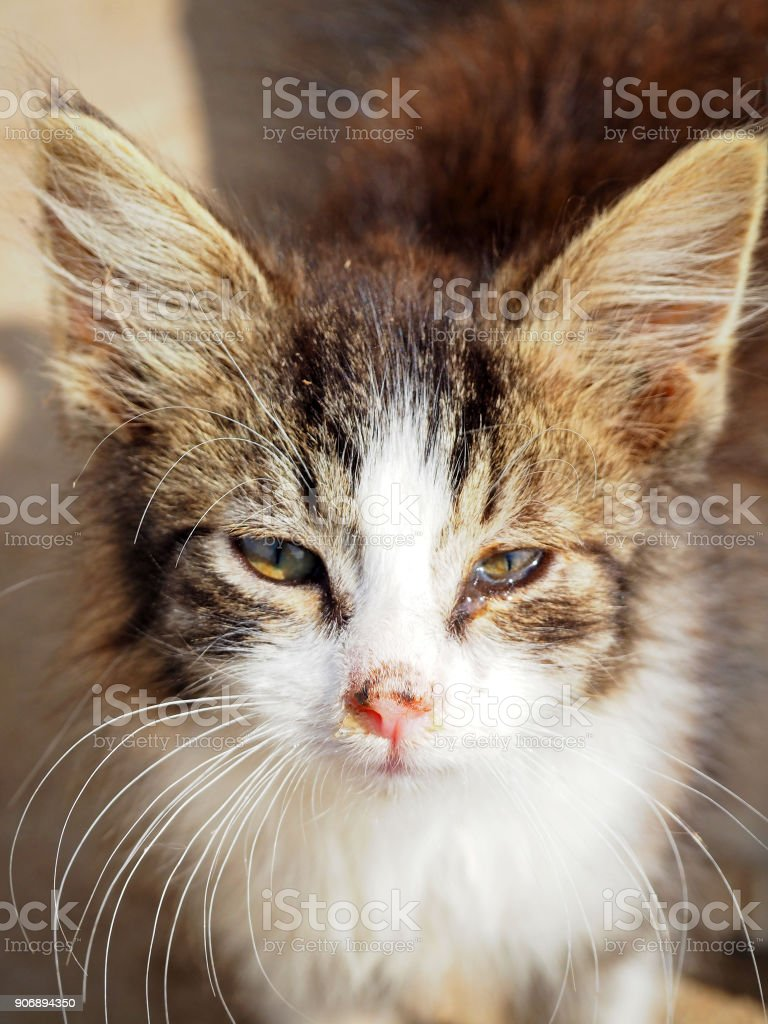 Royalty Free Cat Eyes Pictures Images and Stock Photos