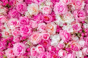 roses background soft colors rose flower flowers backdrop bouquet bunch plant