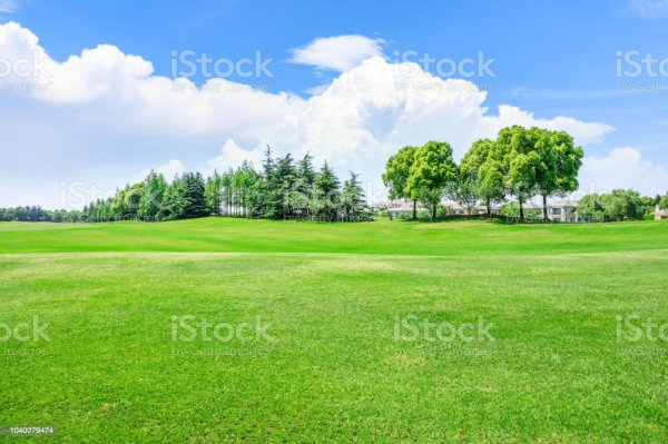 square lawn and forest natural