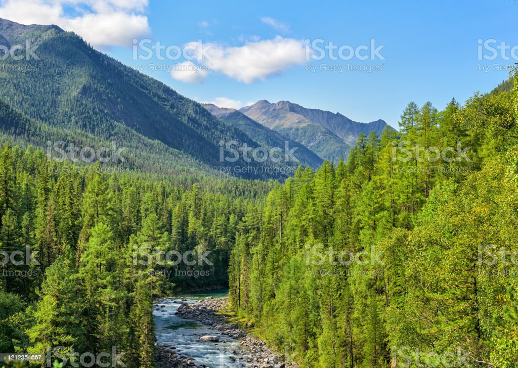 Animals of the taiga tend to be predators. 51 528 Taiga Stock Photos Pictures Royalty Free Images Istock
