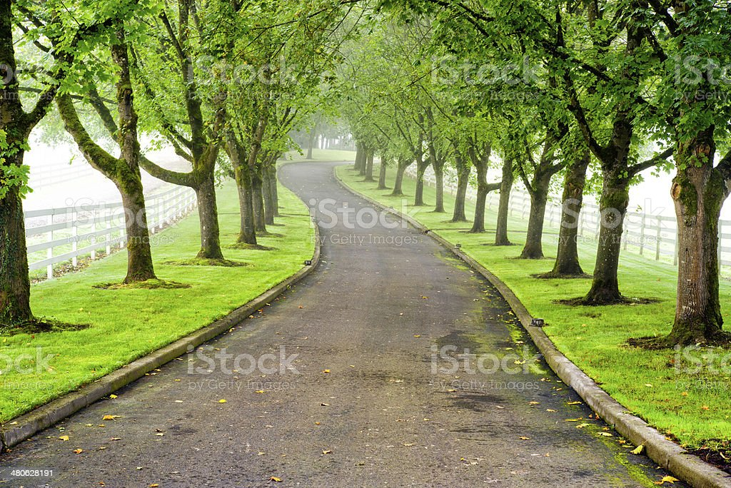 tree lined driveway stock