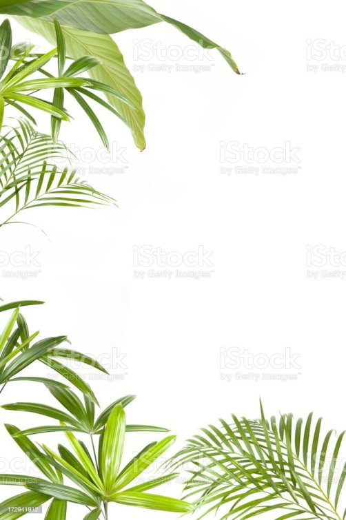 Tree With Leaves Falling Wallpaper Banana Tree Pictures Images And Stock Photos Istock