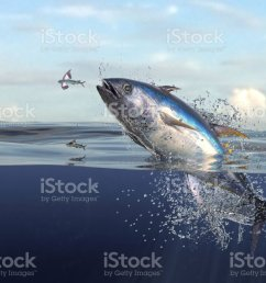 tuna fish jumping out of water half of it in water so many splashes and action in ocean 3d render stock image  [ 1024 x 768 Pixel ]