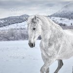 White Horse In Snow Stock Photo Download Image Now Istock