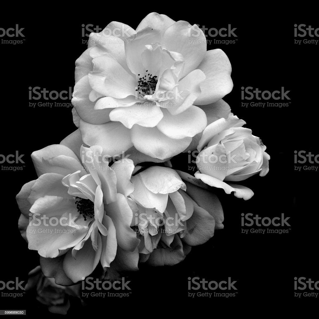 best flower black background