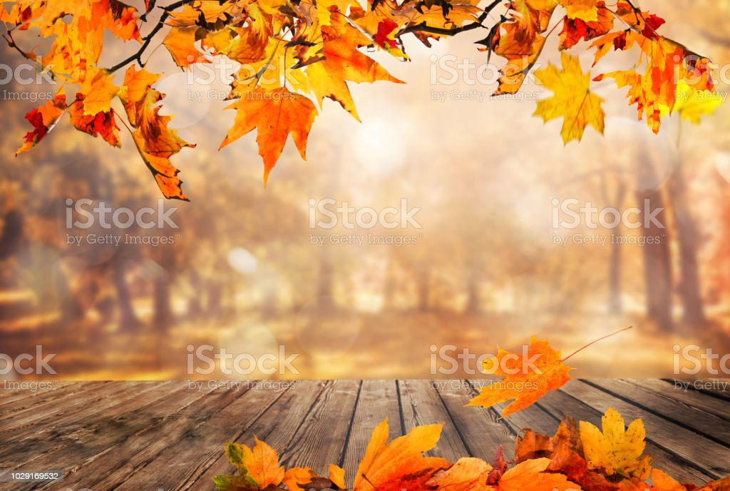 Fall Harvest Desktop Wallpaper Fall Background Stock Photos Pictures Amp Royalty Free