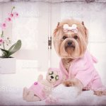 Yorkie And Teddy Bear Friend Message At The Grooming Salon Stock Photo Download Image Now Istock