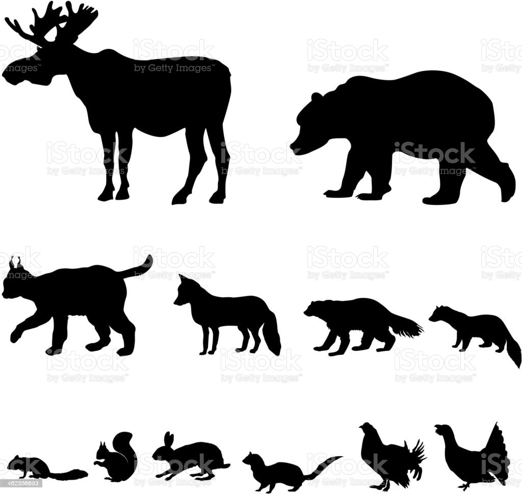 No matter how your day is going so far, these sweet baby animals will put a smile on your face. Animals Living In Taiga Icons Set Stock Illustration Download Image Now Istock