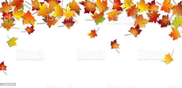 autumn leaves fall colorful maple