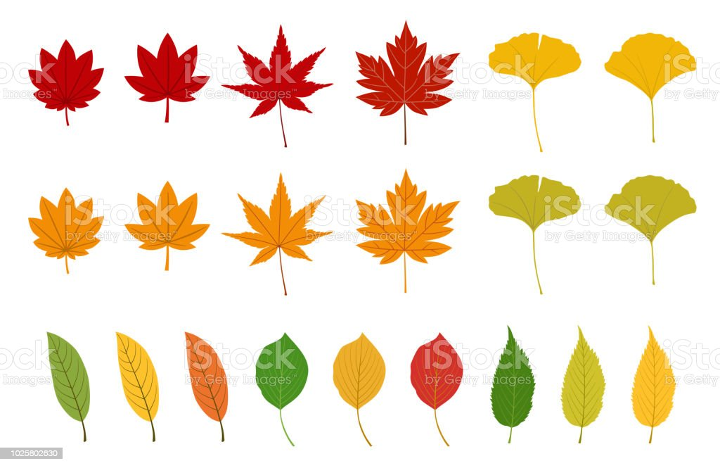 top 60 autumn leaves