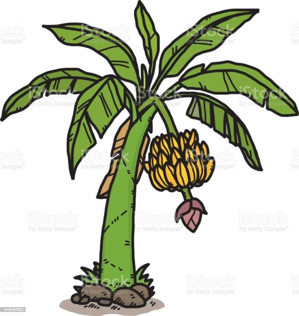 banana tree stock vector art &