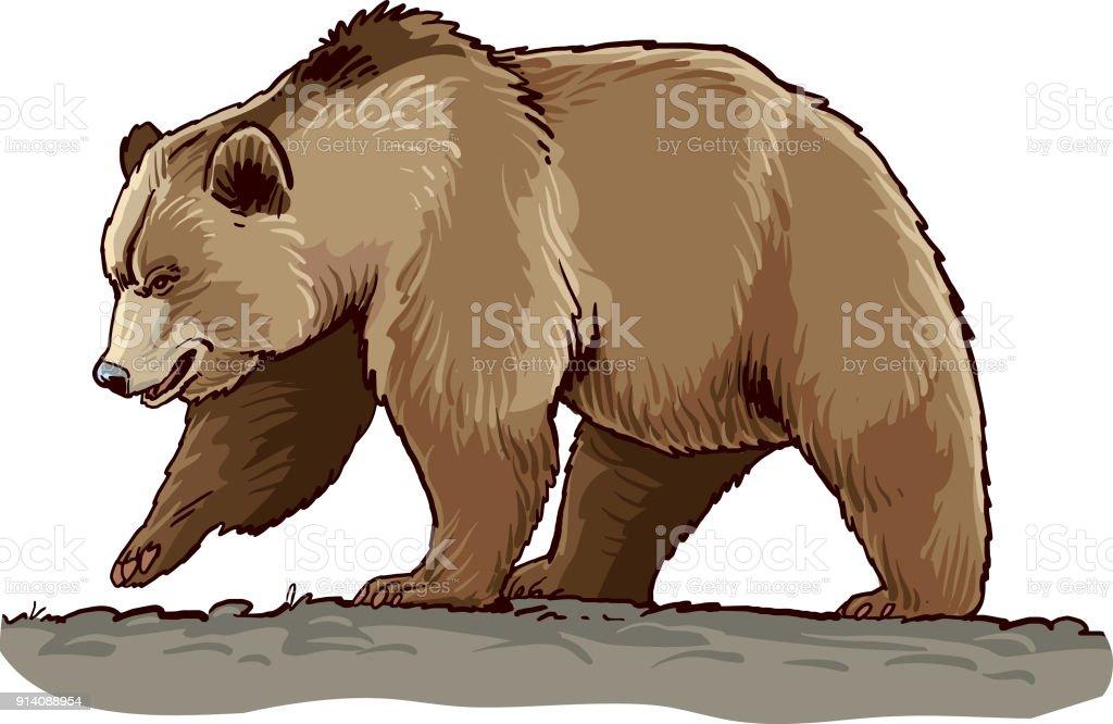 best brown bear illustrations