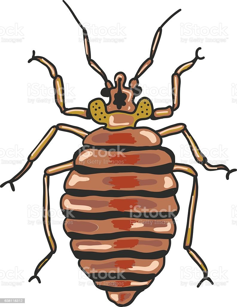 hight resolution of bed bug vector clip art illustration image ilustraci n de bed bug vector clipart illustration image