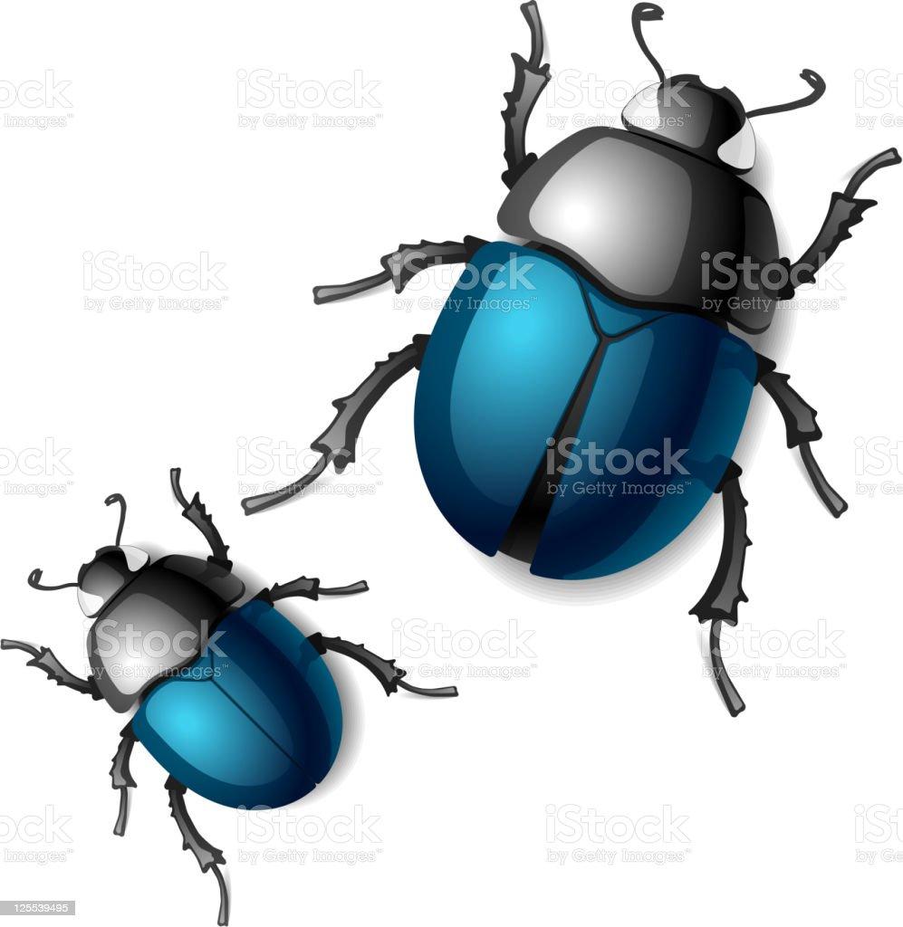 royalty free beetle clip art vector